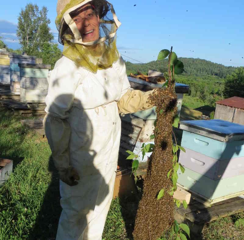 Des abeilles dynamiques